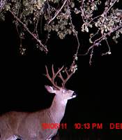 trail cam gallery